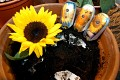Sonnenblumen-Handy