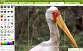 Premium-Features der Online-Bildbearbeitung Picnik kostenlos