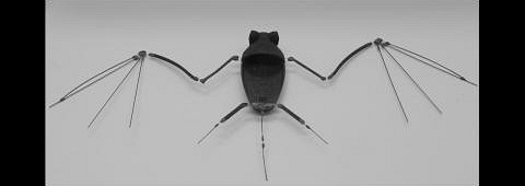 Das Skelett der Roboterfledermaus (Foto: Gheorghe Bunget, North Carolina State University)