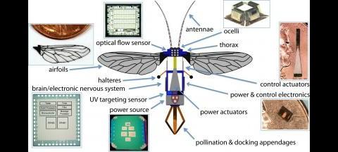 Harvard-Roboterbiene - mit 5-cm-Flügelspannweite und 500 Gramm