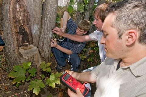 Strom aus dem Baum: Steckdose war gestern (Foto: University of Washington)