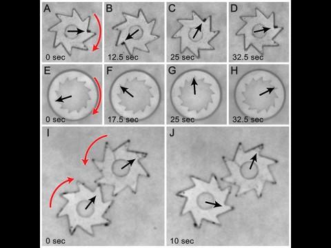 Bakterien drehen winzig kleine Zahnräder. (Bild: Argonne)