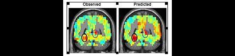 Die Vorhersage über die Gehirnaktivität bei einem bestimmten Wort (rechts) stimmt mit der später gemessenen überein. (Bild: CMU)