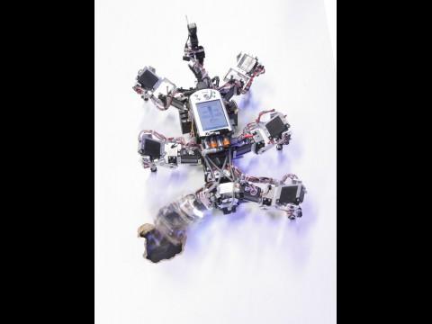 Laufroboter Amos-WD06 (Foto: Network Dynamics Group,Max-Planck-Institut für Dynamik und Selbstorganisation)
