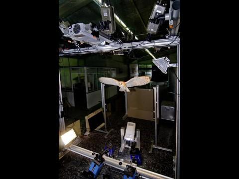 Schleiereule unter Beobachtung (Foto: Universität der Bundeswehr, München)