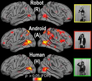 Oben die Gehirnreaktionen auf einen Roboter, in der Mitte auf einen Androiden und unten auf einen Menschen (Bild: UC San Diego)