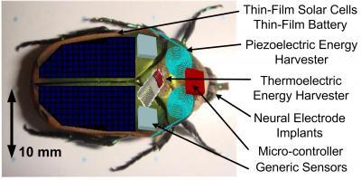 Cyborginsekt: Käfer erzeugt Strom durch Flügelschläge -
