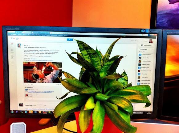 Google+-Nutzer Christian Martel bedeckt den Whitespace mit einer Topfpflanze. (Bild: Christian Martel)