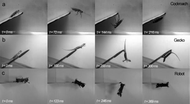 Küchenschabe, Gecko und Dash: Akrobatik im Vergleich (Foto: Plos One) (Fotomontage): Klettband ersetzt Krallen.