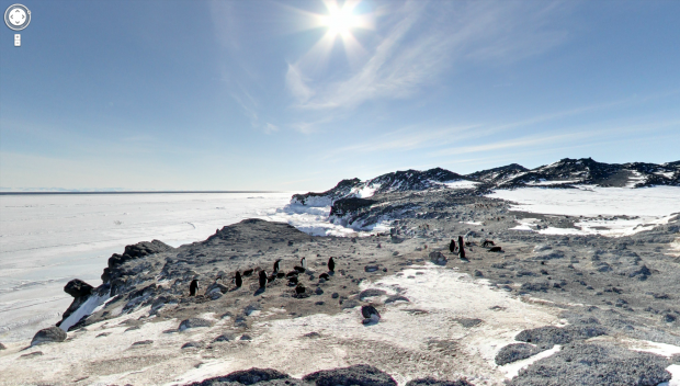 Pinguinkolonie in der Antarktis (Quelle: Google Street View / Screenshot: Golem.de)