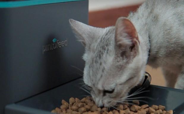 Pintofeed füttert Katze. (Bild: Indiegogo)