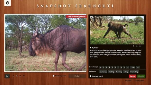 Snapshot Serengeti (Bild: Zooniverse)