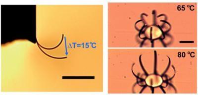 15 Grad reichen, um den Aktor zu verformen. Rechts eine Anordnung mit mehreren Aktoren. Der Balken ist 50 Mikrometer lang. (Bild: Lawrence Berkeley National Lab)