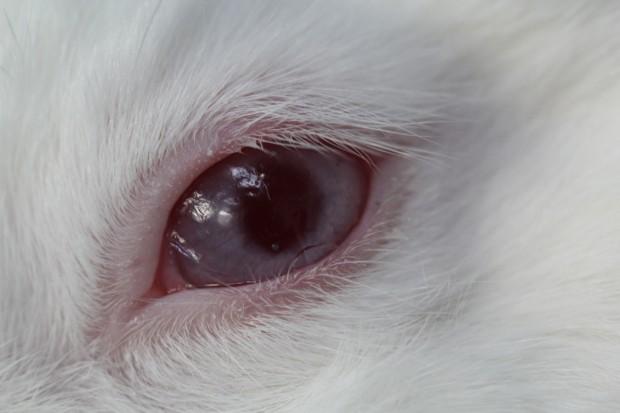 eichelring undurchsichtige kontaktlinsen