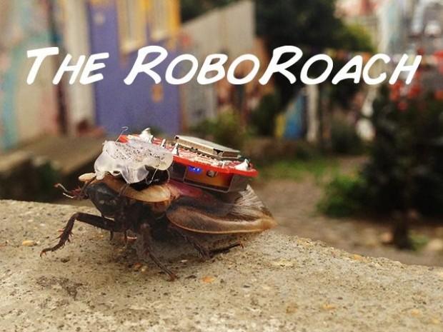 Roboroach, das Cyborginsekt (Bild: Backyard Brains)