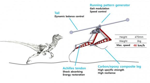 Der Raptor ist einfach konstruiert. Jedes Bein wird nur von einem Motor angetrieben. Eine Sehne speichert Energie zwischen. (Bild: Kaist/Screenshot: Golem.de)