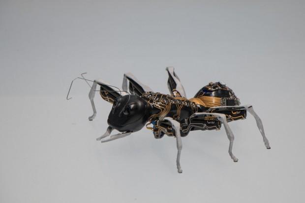 Bionic Ant ist ein von Festo entwickelter Roboter nach dem Vorbild einer Ameise. (Foto: Werner Pluta/Golem.de)