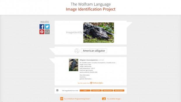 Der neue ImageIdentify-Befehl von Mathematica erkennt zahlreiche Objekte auf Fotos korrekt - so wie hier einen Alligator. (Screenshot:Golem.de/Tobias Költzsch)