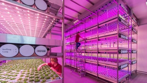 In einer Vertical Farm wachsen Pflanzen unter kontrollierten Bedingungen, wie hier in der Brightbox in Venlo. (Foto: Philips)