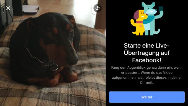 Nach dem Klick auf das Livesymbol wechselt die App in den Übertragungsmodus. (Screenshot: Golem.de)
