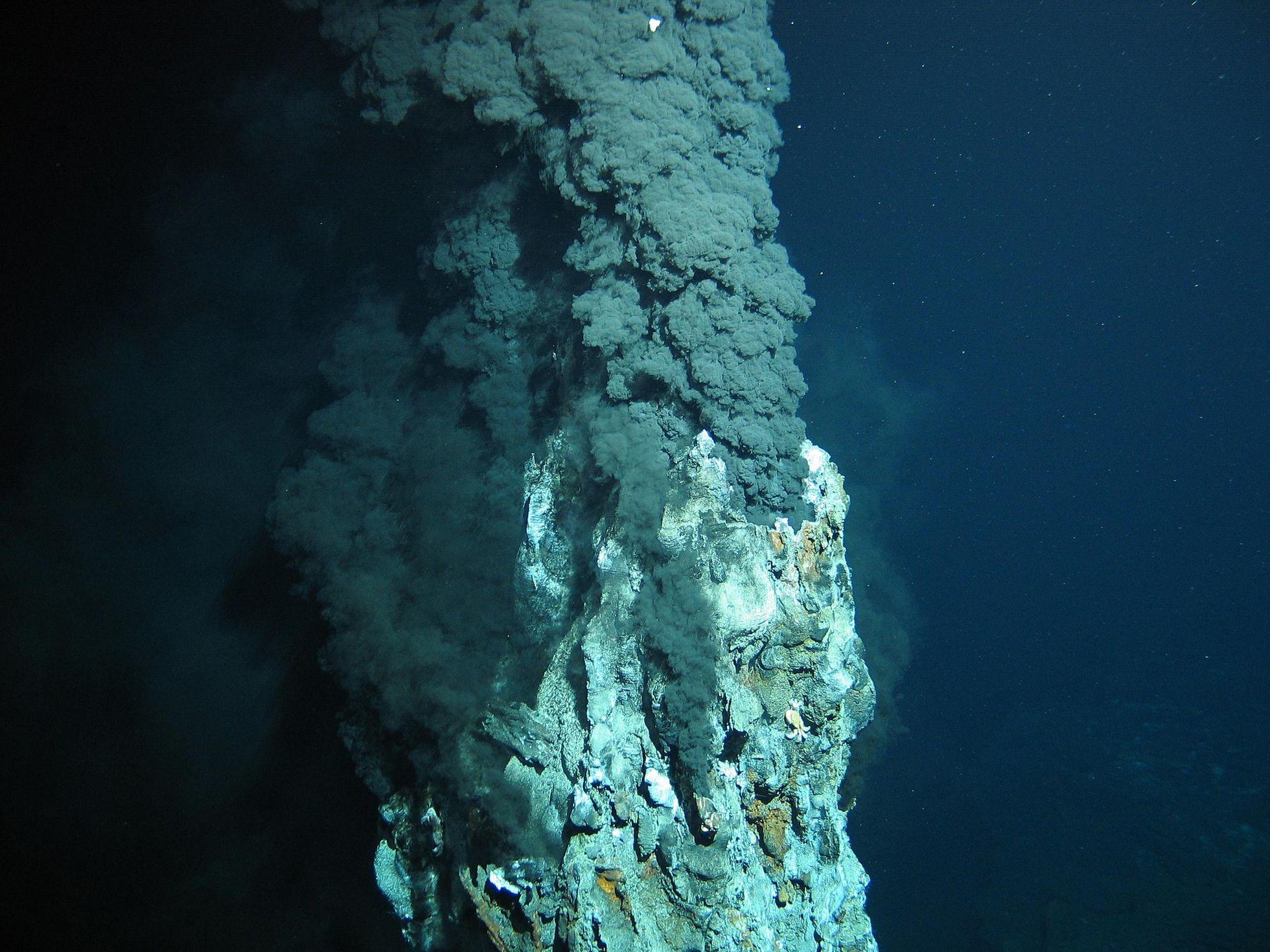 Deep Sea Mining: In der Tiefsee liegt die Zukunft der Technik - Sie enthalten Metalle, ... (Foto: ROV-Team/Geomar)