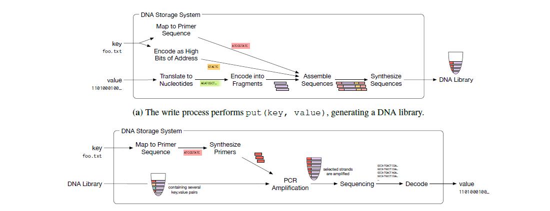 Datenspeicherung: Microsoft kauft zehn Millionen Stränge synthetischer DNA - Schreib- und Lese-Prozess der DNA (Bild: Microsoft Research)