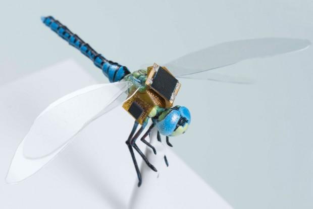 Libelle mit Minirucksack (Foto: Draper)