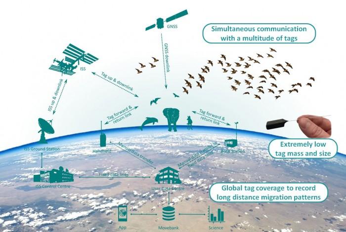 Übersicht über das Projekt Icarus (Bild: Max-Planck-Institut für Ornithologie)