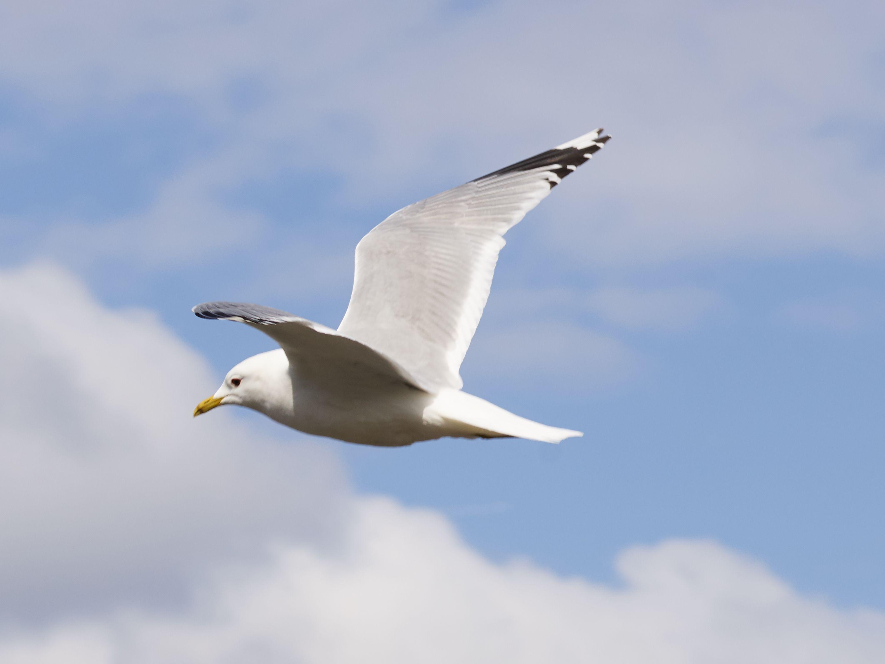 Phase One IQ4 im Test: Think big - Doch auf dem Bild ist der Vogel in einer 100-Prozent-Ansicht gut zu erkennen. (Bild: Werner Pluta/Golem.de)