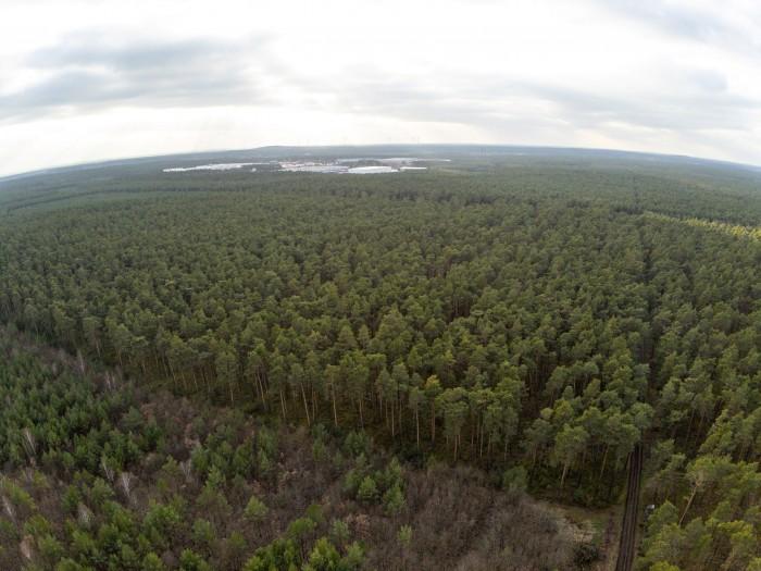 In dem Wald bei Grünheide will Tesla seine Gigafactory 4 bauen. (Foto: Martin Wolf/Golem.de)