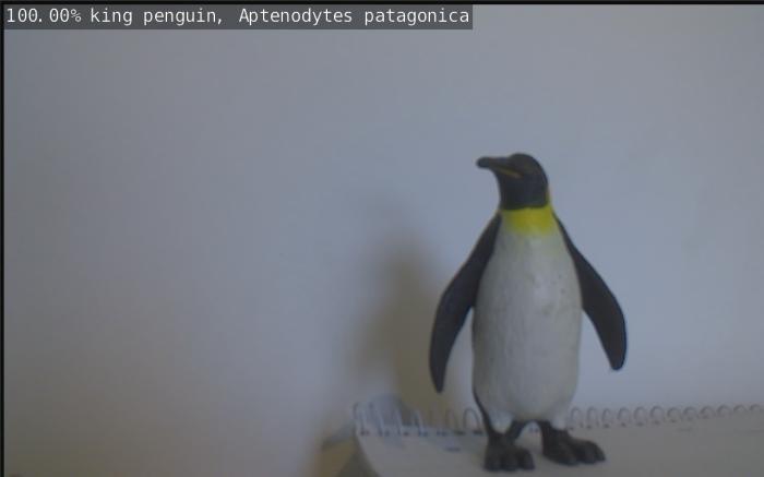 Richtig erkannt! Ein Pinguin (Bild: Dirk Koller).